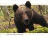 Charla 'El oso pardo cantábrico. Cuaderno de campo y observación', de Alfonso Hartasánchez